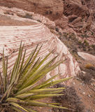 Red Rock Canyon and yucca plant, Nevada royalty free stock photo