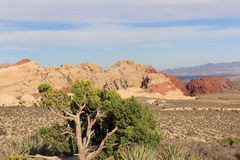 Red Rock Canyons Stock Images