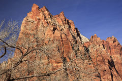 Red Rock Cliff Court Patricarchs Zion Canyon Utah Royalty Free Stock Image