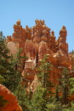 Red rock formation in bryce canyon park, utah Royalty Free Stock Image