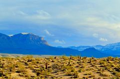 Mountains snow desert cactus yucca Stock Image