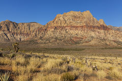 Red Rock mountains with golden desert plants in foreground. Royalty Free Stock Images