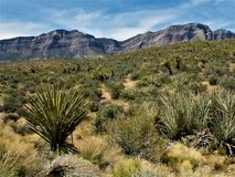 Red Rock National Conservation Area with Yucca Plant in Foreground Stock Image