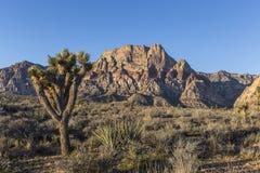 Red Rock Nevada Joshua Tree Stock Photos