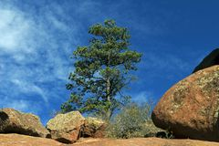 Red Rock with Pine. Royalty Free Stock Photography