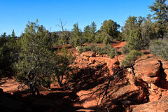 Red rock in Sedona. Panorama in Sedona by a very hot summer day Stock Image
