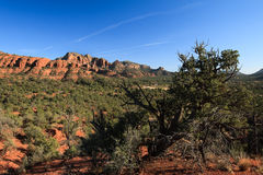 Red rock in Sedona. An old tree have a tough life in Sedona Stock Photography