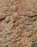 Red rock texture. Rough red stone background texture Stock Images
