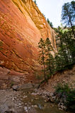Red rock walls of Zion Canyon, taken during The Narrows hike at Royalty Free Stock Photo