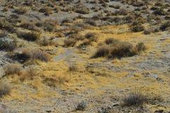 Red Rocks Canyon Yellow Gold Grass California. Dry Yellow Grass Red Rocks Canyon State Park in high desert of Southern California Stock Photos