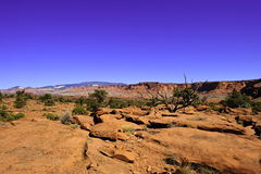 Red Rocks and Desert Stock Images