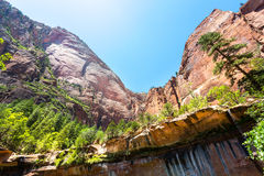 Red rocks with evergreen pines, Zion National Park royalty free stock photos
