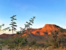 Red rocks of grand canyon, arizona USA royalty free stock image
