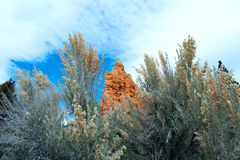 Arches National Park, Rocks Red Desert Mountain Landscape. Red Rocks and Pine Trees at Arches National Park, Moab, Utah, Landscape with Blue Sky royalty free stock photography