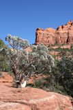 Red Rocks of Sedona Arizona Stock Photos