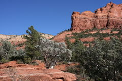 Red Rocks of Sedona Arizona Royalty Free Stock Image