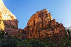Red rocks in Zion National Park, USA Royalty Free Stock Images