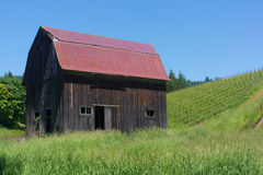 Old Barn Red Roof in Vineyard. Oregon wine countryside is filled with rolling hills covered with local vineyards. This red roofed old barn stands sentry to the stock photos