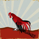 Red rooster Royalty Free Stock Image