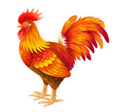Red rooster illustration. Bright red rooster vector illustration. EPS10 Stock Photo