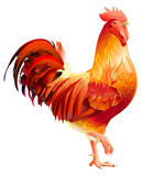 Red Rooster symbol 2017 by Chinese calendar. Isolated on white vector illustration Royalty Free Stock Photos