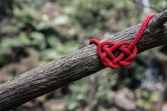 Red Rope Tied Around A Branch