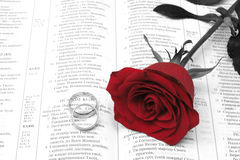 Red rosa Royalty Free Stock Photo
