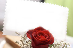Red rosa Royalty Free Stock Images