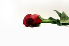 Red Rose 1 Stock Photography