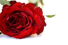 Free Red Rose Royalty Free Stock Image - 102481196