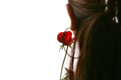 Red rose. Valentine's Day beautiful Red rose Royalty Free Stock Photos