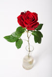 Red rose. Single red rose in vase over white royalty free stock photography