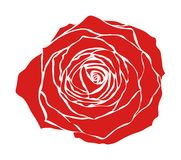 Red rose. Rich red rose on a white background Stock Photography
