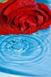 Red rose. And splash; macro Royalty Free Stock Photos