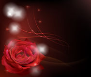 Red rose. Dark background with red rose mean passion, love,fashion and so on Stock Photos