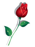 Red Rose. Bud red roses with green leaves and drops of dew Stock Photo