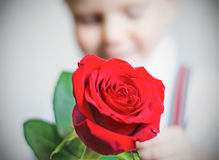 Red rose. Big red rose in hands of the lovely boy Royalty Free Stock Photography