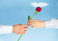 Red Rose. Male and female hands holding a red rose on a background of blue sky royalty free stock photos
