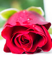 Red rose. A single red rose in high key Royalty Free Stock Photos