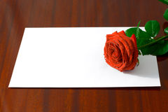 The red rose Royalty Free Stock Photo