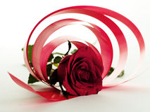 Red rose. With circles of red ribbons around on white background Royalty Free Stock Image