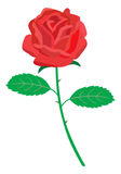 Red rose. Simple red rose. Vector EPS format available Stock Photo