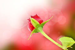 Free Red Rose Stock Images - 60794664