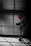 Red Rose. In window Royalty Free Stock Photography