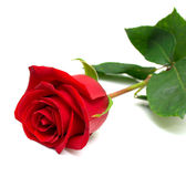 Red rose. With green leaves. Isolation on white background. Shallow DOF Royalty Free Stock Photography