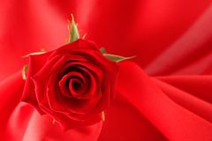 Free Red Rose Stock Photo - 673840