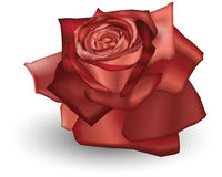 Red Rose. Illustration of a Red coloured rose Stock Photos