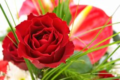 Red rose. With other flowers in the background Stock Images
