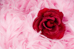 Red rose. Red fabric - textile rose in pink feathers Royalty Free Stock Image