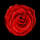 Red rose. Beautiful red rose, symbol of love and passion (made using gradient meshes Royalty Free Stock Image